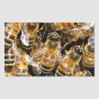 HONEY BEES INSECT CAUSES BACKGROUNDS WILD BUMBLEBE RECTANGULAR STICKER