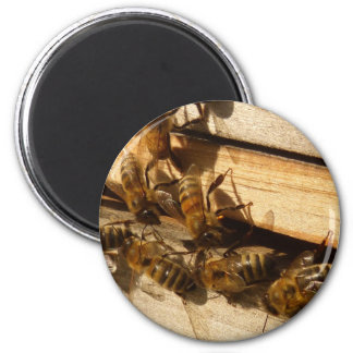 Honey Bees Magnet