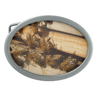 Honey Bees Oval Belt Buckle