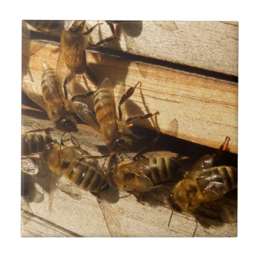 Honey Bees Small Square Tile