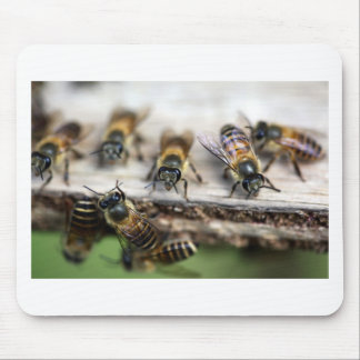Honey bees working at beehive mouse pads