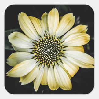 Honey Blossom Yellow Coneflower Sticker