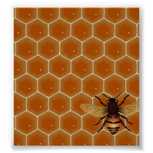 Honey Comb and Bee Poster