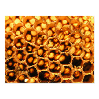 Honey Comb Postcard