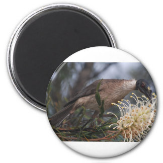 Honey Eater 2 Inch Round Magnet