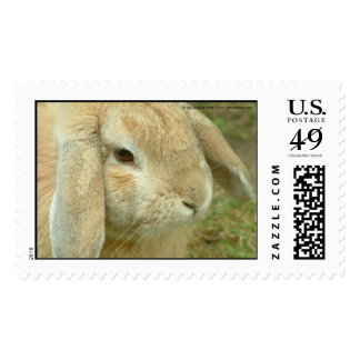 Honey,  Lop-eared Rabbit Postage
