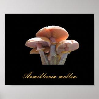 Honey mushroom art poster