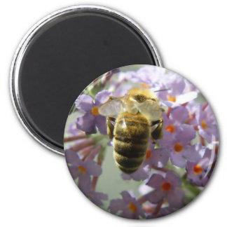 Honeybee and Buddleia Flowers Magnet
