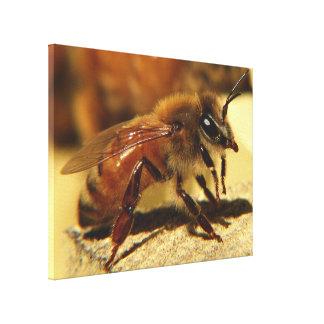Honeybee Canvas Print