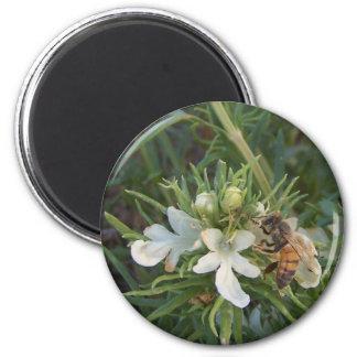 honeybee feeding fridge magnet
