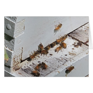 Honeybee Hive Entrance Card