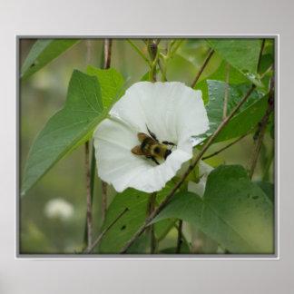 Honeybee in Flower Poster