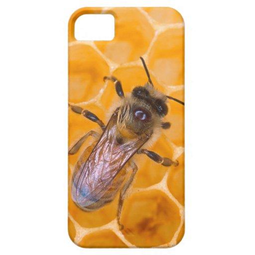 Honeybee iPhone 5 Case