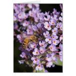 HoneyBee on a Butterfly Bush Valentine Card