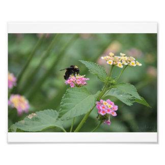 Honeybee on a Flower Photo Print