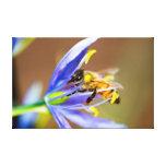 Honeybee on Blue Flower Gallery Wrapped Canvas
