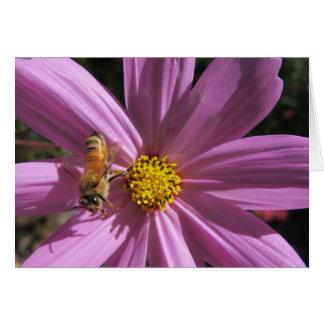 Honeybee on Cosmos Card