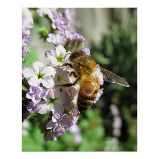 Honeybee on Heliotrope Poster
