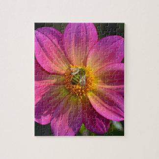 Honeybee on pink dahlia jigsaw puzzle