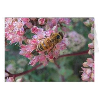 Honeybee on Pink Sedum Card