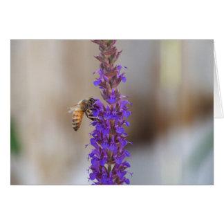 Honeybee on Salvia Card