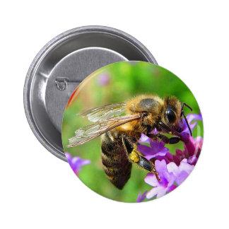 Honeybee on Verbena Button