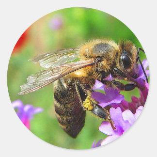 Honeybee on Verbena Classic Round Sticker