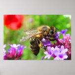 Honeybee on Verbena Poster