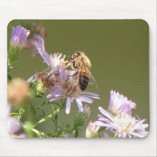 Honeybee on Wild Asters Mouse Pad
