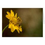 Honeybee on Yellow Flower Greeting Card