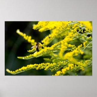 Honeybee on Yellow Wildflower Poster