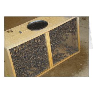 Honeybee Package Card