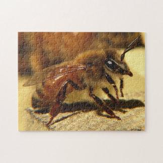 Honeybee Puzzle