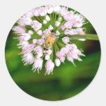 HoneyBee Sticker