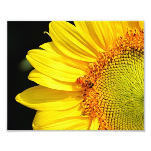 Honeybee Visiting a Sunflower Photo Print