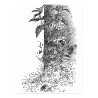 Honeybees Frequent Flowering Mint Postcards