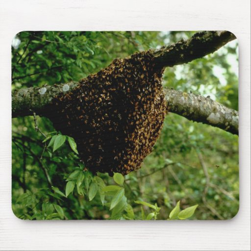 Honeybees Mouse Pad