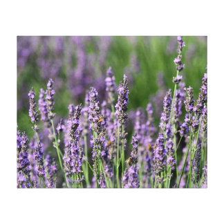 Honeybees on Lavender Flowers Canvas Print