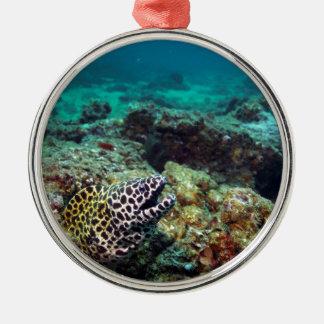 Honeycomb moray eel metal ornament