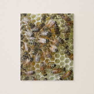 Honeycomb Puzzle