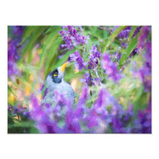 "Honeyeater in Bush Sage 12x16"" photo print"