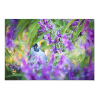 "Honeyeater in Bush Sage 13x19"" Photo Print"