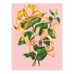 Honeysuckle Bouquet Postcard