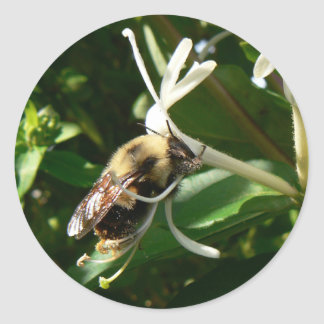 Honeysuckle Bumble Bee Classic Round Sticker