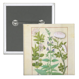 Honeysuckle, Sage and Rose Button