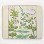 Honeysuckle, Sage and Rose Mouse Pads