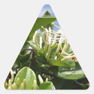 Honeysuckle Triangle Sticker