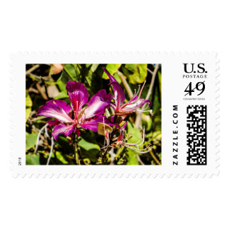 Hong Kong Orchid US First Class Postage Stamps
