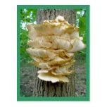 Hongo de estante en la postal del árbol