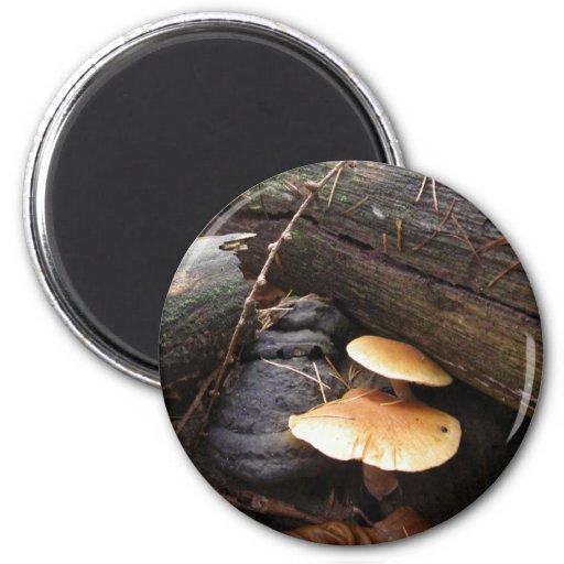 Hongos #3 del bosque imán redondo 5 cm